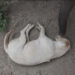 un éléphant tente de réveiller un chien