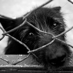 condamnation pirson maltraitance chien chat