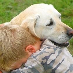chien empathie douleur chagrin