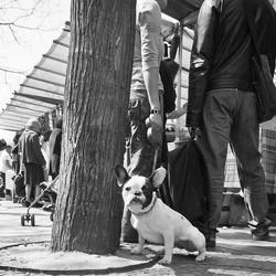 chien en ville chien citadin