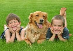 Les chiens Baby Sitters.. Magnifique... Chien-enfant-109