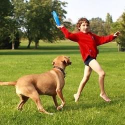 chien enfant morsure etude