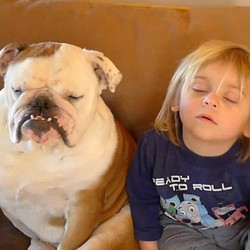 enfant chien sieste video rigolo