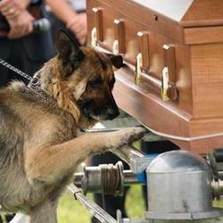 Chien devant cercueil
