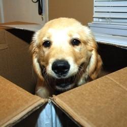 envoyer chien par la poste