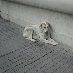 chien errant istanbul
