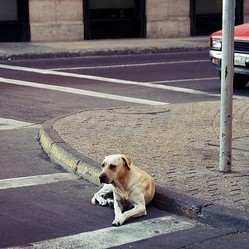 chien errant