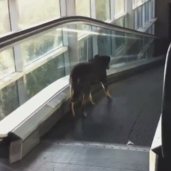 un chien prend un escalator à l'envers