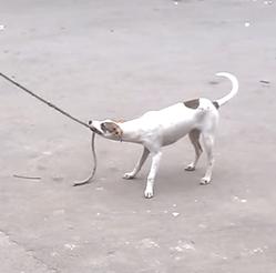 chien et corde