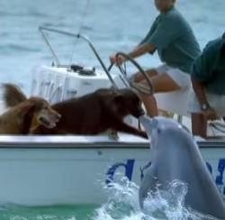 Chien et dauphin