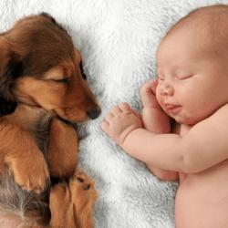 races chiens gentils enfants