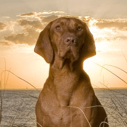 chien devant soleil couchant