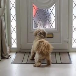 chien courrier facteur