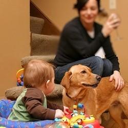 chien famille