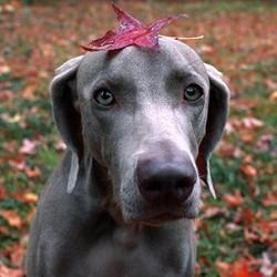chien feuille automne