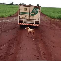 un chien court après le corps de son maître