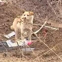 chien fidele tombe maitre hatchi