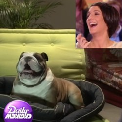 Florence Foresti chien interview daily mouloud canal +