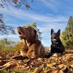 chien forêt