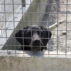 Un chien dans une fourrière très pauvre du sud des Etats-Unis