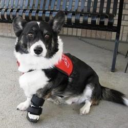 fracture chien os cassé
