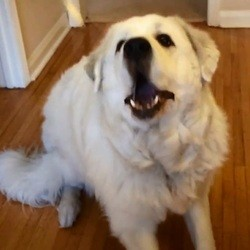 un chien tente d'attraper des friandises