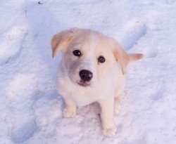 protéger chien froid hiver