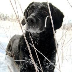 chien conseil froid hiver vanier