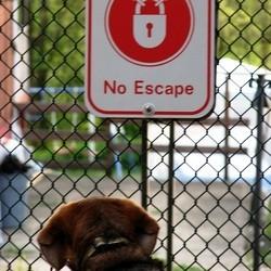 chien panneau no escape