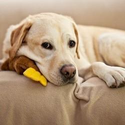 chien malade gastro entérite
