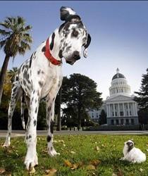 chien - plus grand du monde
