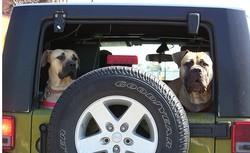 chien pollue plus qu'une voiture