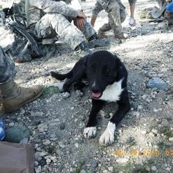 chien guerre afghanistan dons