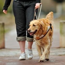 ecoles chien guide d'aveugles