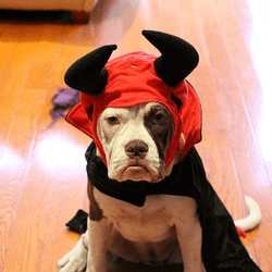 chien halloween déguisement