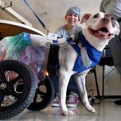 chien handicape visite patients