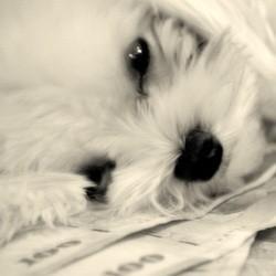 Un chien hérite d'un million de dollars