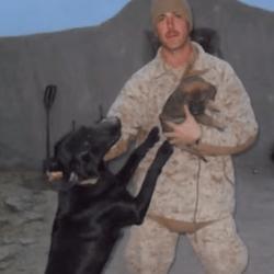 Le chien héros
