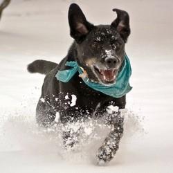 chien hiver froid entretenir toiletter