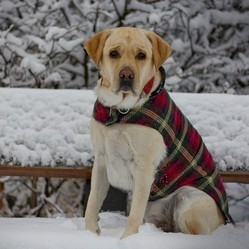 chien hiver froid neige