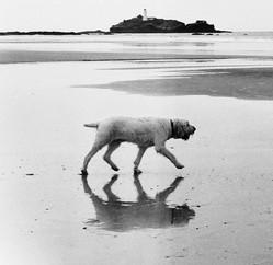 chien survivant île déserte