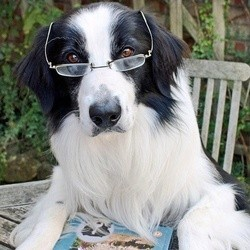 intelligence chien communication compréhension