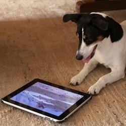 Chien iPad