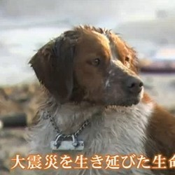 chien japon tremblement terre secours video