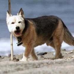 chien jennifer aniston norman