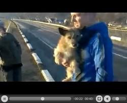 chien jeté vivant d'un pont