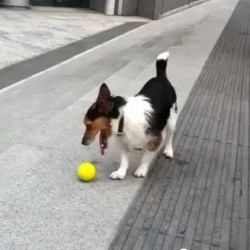 chien joue seul à la balle va chercher