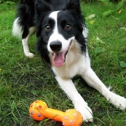 les jouets en plastique pour chiens pourraient être dangereux