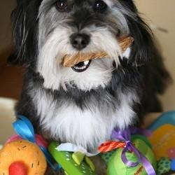 chien jouets
