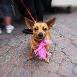 chien kidnappé
